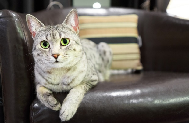 How to Repair Cat Scratches on a Leather Couch